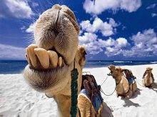 Собаки лают – караван идёт!