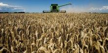 Внутрішній конфлікт і групи впливу. Навіщо в ЛНР брешуть про відсутність експорту зерна в Росію