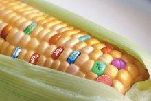 Главный эколог Киева Александр Прогнимак: ГМО медленно убивает нацию