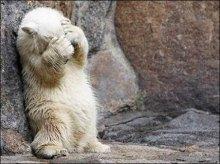 Ведмідь на похміллі