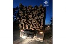 На Луганщині вирубали майже 10 тисяч заповідних сосен, деревину відвантажували на окуповані території