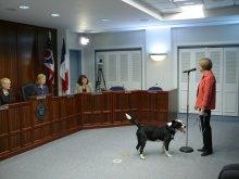 Открытка вторая. Собака и человек, кто кого охраняет в Америке?