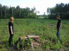 Судді засудили ліс до страти: легені Київщини розріжуть бензопили?