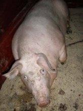 Акимова продолжает подкладывать свинью Партии регионов