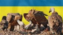 Сучасне Українське козацтво та його проблеми.