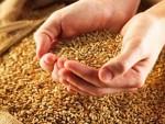 Оптимістична конкурентноспроможність українських сільгоспвиробників у світлі сучасних світових тенденцій