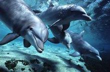 Країна без дельфінаріїв