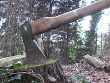 Земельний скандал у Коцюбинському: втрутилась прокуратура