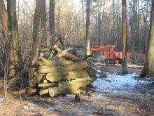 Передвиборчий цинізм: депутати, що роздерибанили ліс, виступили за його збереження