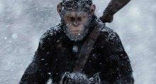 Шут проигрывает даже обезьяне, о каком президентстве может идти речь?