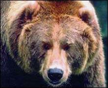 Про ''російського медведя''