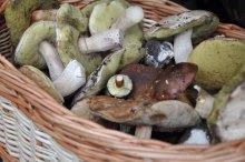 Секрети грибників: сезон тихого полювання відкрито
