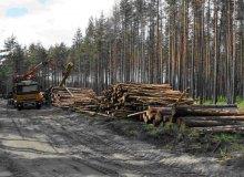 Вирубування лісів в Україні. Чому держава не реагує на це?!