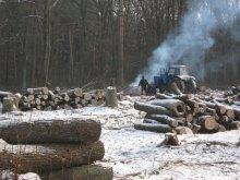 Реалії української лісової галузі: Чим далі в ліс, тим... менше дров